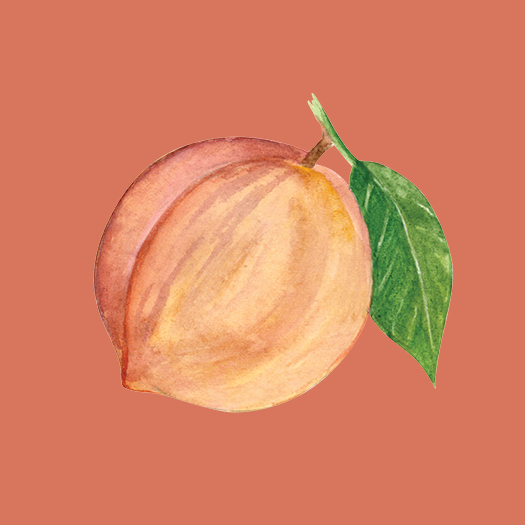 Peach Watercolor Illustration © Cynthia Oswald