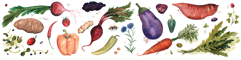 botanical watercolor illustration veggies vegetables