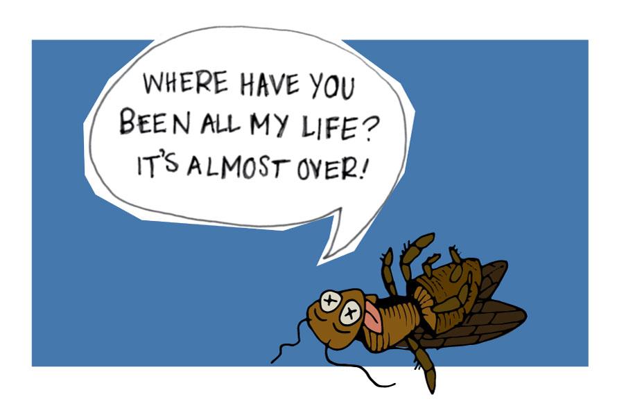 dead bug illustration Oswald