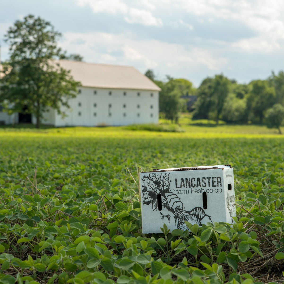 Photo Courtesy of Lancaster Farm Fresh