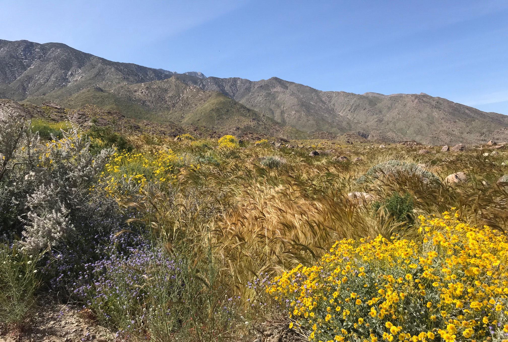 Palm Springs Desert Bloom